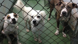 Miami-Dades Animal Shelter